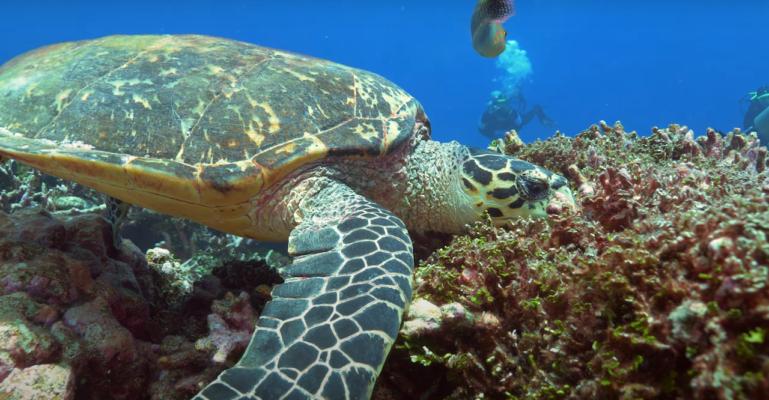 Plongee sous marine Iles Grenadines